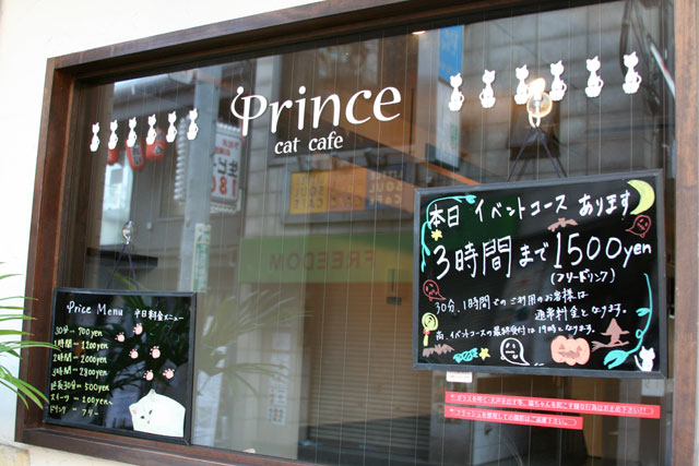 here is a cat cafe Genki, Mann?