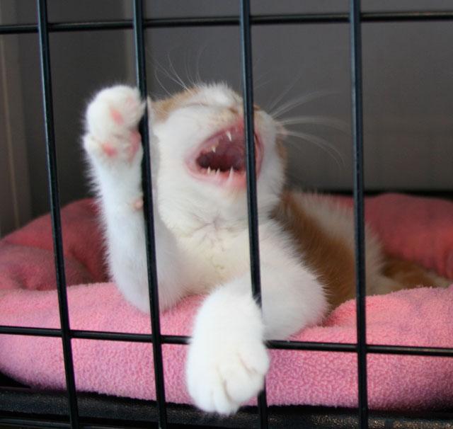 sleepy kitten4 Genki, Mann?